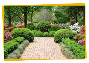 lawn-maintenance-landscaping